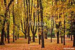 Színes lombozat az őszi parkban (id: 12191)