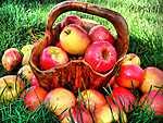 Almák kosárban a mezőn (id: 2191) falikép keretezve