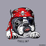 French Bulldog portrait in a pirate bandana. Vector illustration (id: 14492)