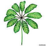 Watercolor painting green leaves,palm leaf isolated on white bac (id: 14693) falikép keretezve