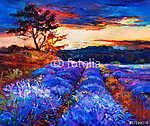 Lavender mezők (id: 4393)