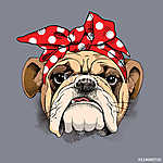 Bulldog portrait in a headband. Vector illustration. (id: 14494)