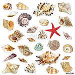 Seashel kollekció fehér háttérrel. (id: 10695)