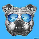 Portrait of English Bulldog mirror sunglasses. Hand drawn illust (id: 14897) vászonkép