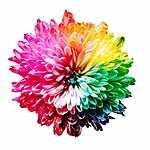Szivárvány virág (id: 17199) falikép keretezve