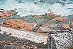 Szörfös, Bondi Beach, Ausztrália (id: 17299) poszter