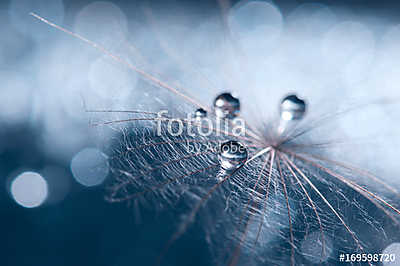 A beautiful and artistic image of a dandelion with drops on a bl, Premium Kollekció