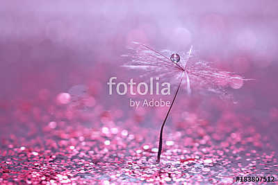 A dandelion seed with a drop of water is in sparkling sparkles.  - vászonkép, falikép otthonra és irodába
