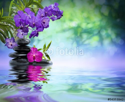 lila orchideák, fekete kövek a vízen, Premium Kollekció