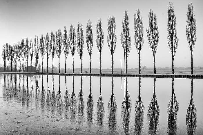 A fák tükröződnek a tónál hajnalban fekete-fehérben, Premium Kollekció
