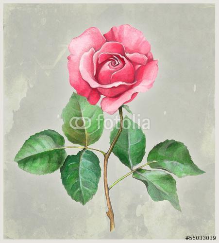 Rózsavirág akvarell illusztrációja. Tökéletes autó üdvözléséhez, Premium Kollekció