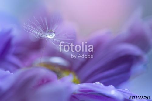 A dandelion seed with a drop of dew on a purple flower. Art work, Premium Kollekció