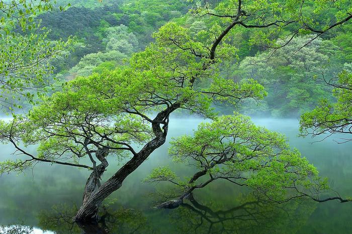 Vízben álló fák,