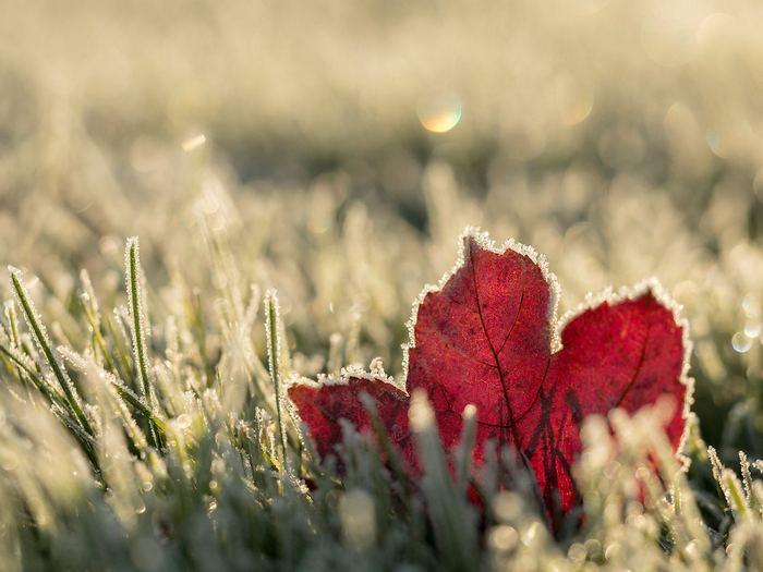 A kertre leszállt a dér (őszi falevél a fűben), Splash Photo