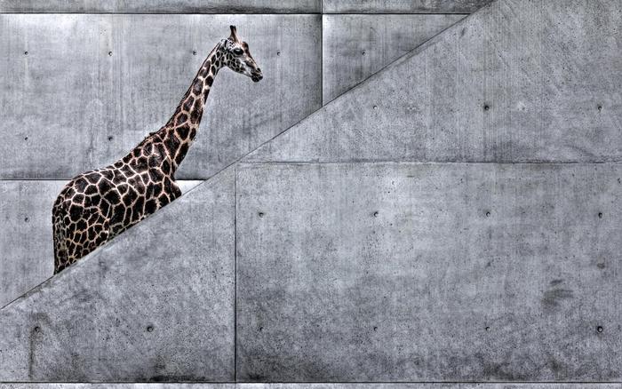 Zsiráf a lépcsőn,