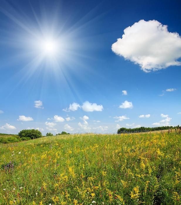 Virágos domboldal napsütésben,