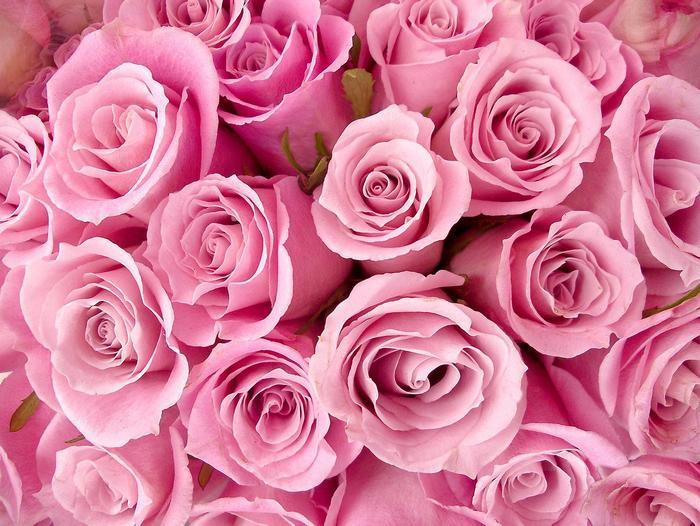 Rózsaszín rózsacsokor,