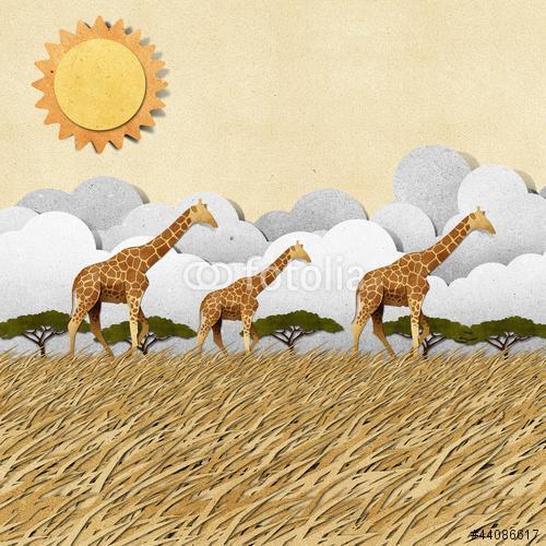 Zsiráf szafari verőfényes napsütésben, Premium Kollekció