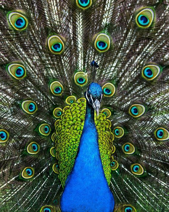 A páva színei, Partner Kollekció