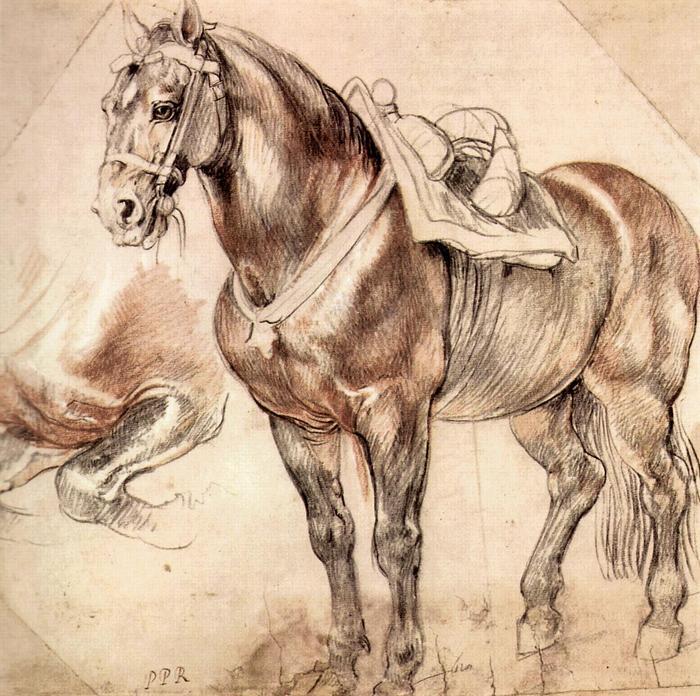 Ló (tanulmány), Peter Paul Rubens