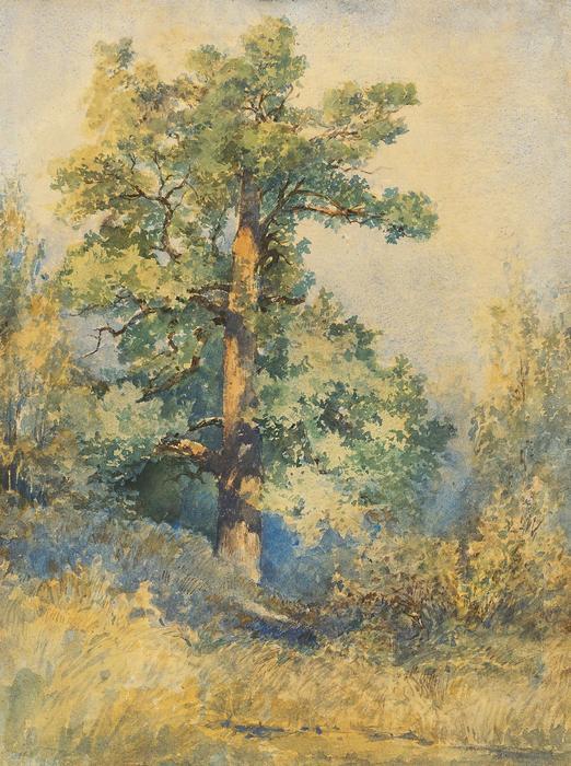 Egy fa vázlata, Mednyánszky László