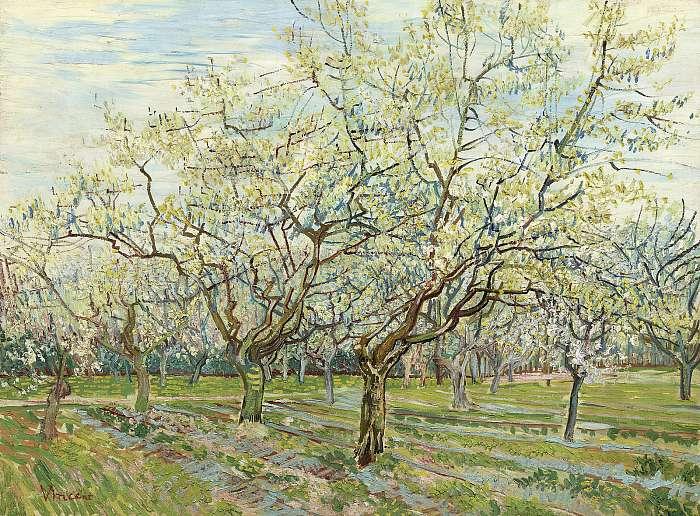 Virágzó gyümölcsfák, Vincent Van Gogh