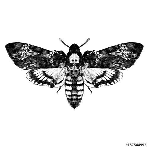 a butterfly with a skull on the back