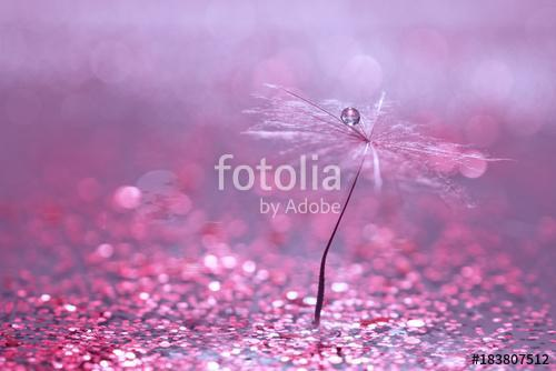 A dandelion seed with a drop of water is in sparkling sparkles. , Premium Kollekció