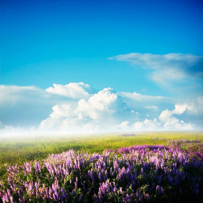 Virágmező felhőkkel,