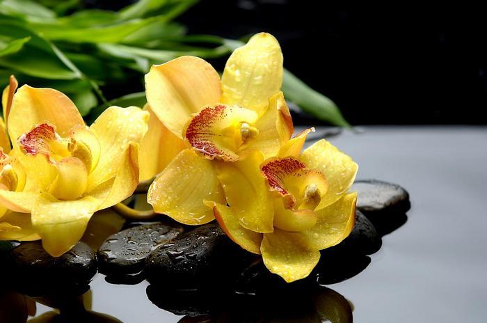 Vizes csendélet kövekkel és orchideával,