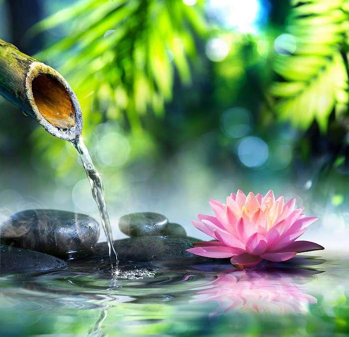 zen kert fekete kövekkel és rózsaszín vízzel, Premium Kollekció
