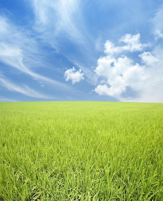 Zöld mező felhőkkel,