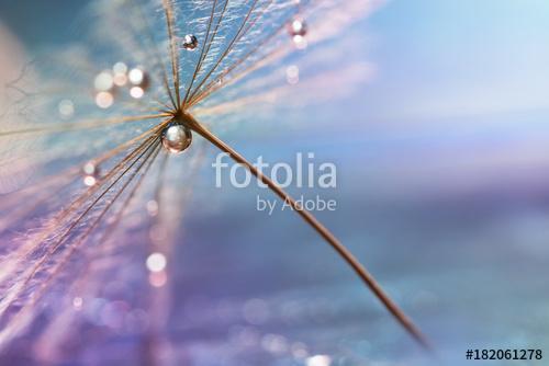 A drop of water. A beautiful macro dandelion with a drop of wate, Premium Kollekció