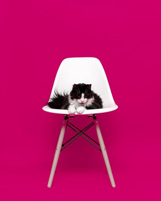 Cica a széken, Partner Kollekció