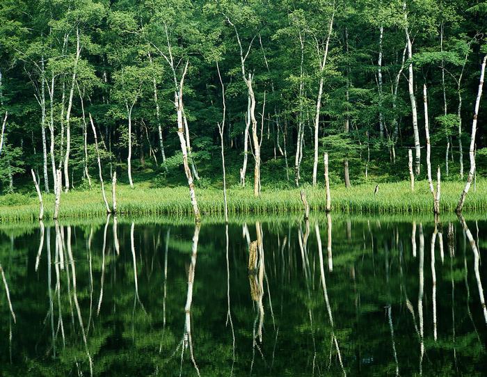 Vízben tükröződő zöld erdő,