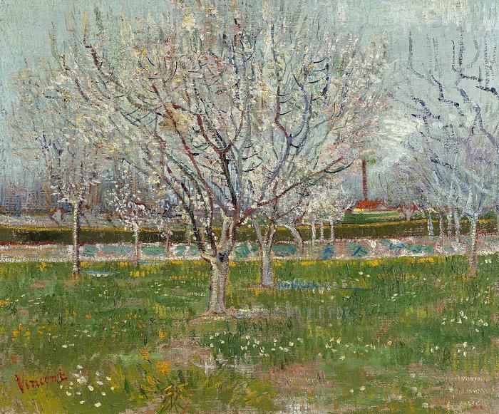 Virágzó szilvafák, Vincent Van Gogh