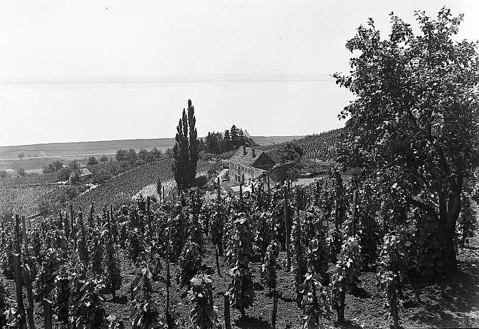 Badacsony szőlővesszei 1934, FORTEPAN